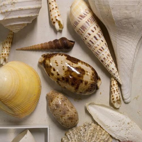 How shells are formed