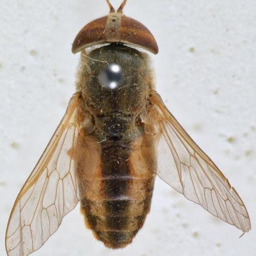 Horse Flies: who's related to whom?